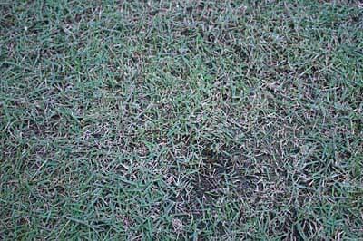 ウッドデッキ前の芝生
