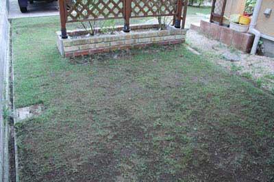 先週の芝生の様子