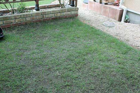本日の芝生の様子