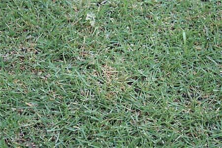 芝生25mm