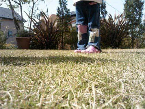 4月の芝生