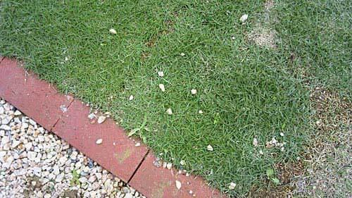 芝生の上に小石