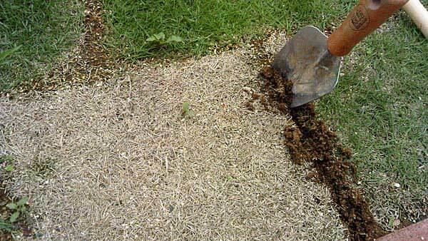 芝生を剥がす