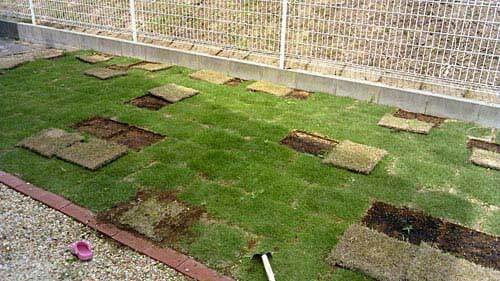 選抜された芝生