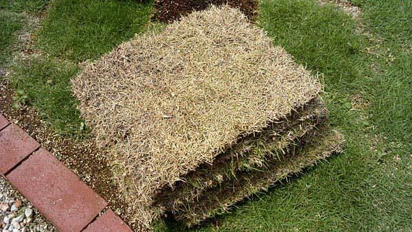 選抜メンバーから外れてしまった芝生