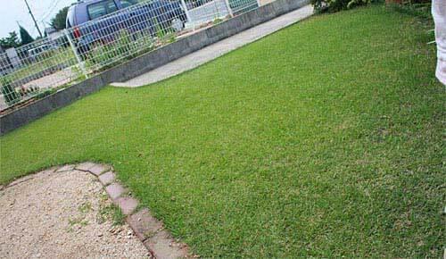 前庭の芝生