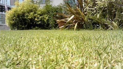 我が家の芝