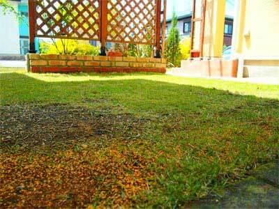中庭の芝生