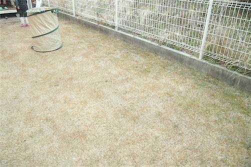 除草後の芝生