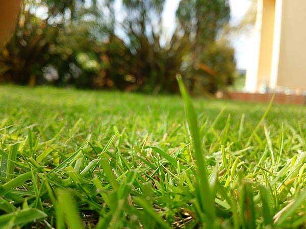 水やり後の芝生