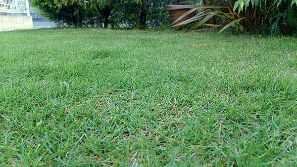 芝生の写真