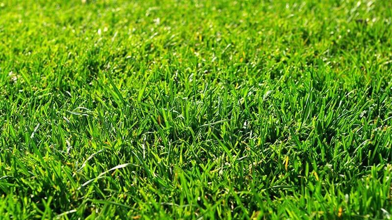 きれいな芝生の写真