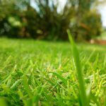 芝生の除草【しばふのじょそう】