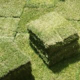 芝生の選び方