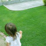 芝生が育つ条件