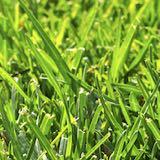 芝生の起源