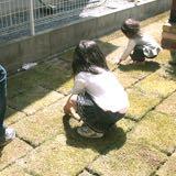 芝生の植え方