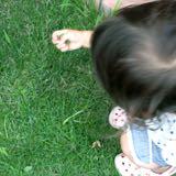 芝生の除草