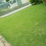 芝生のトラブル