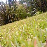芝生が枯れる原因