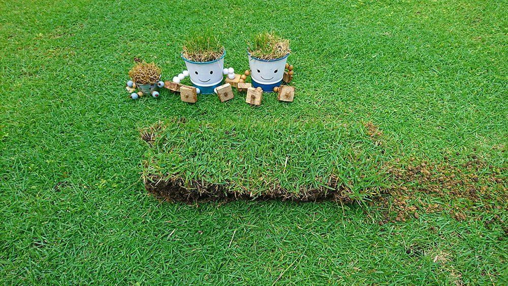切り出した芝生